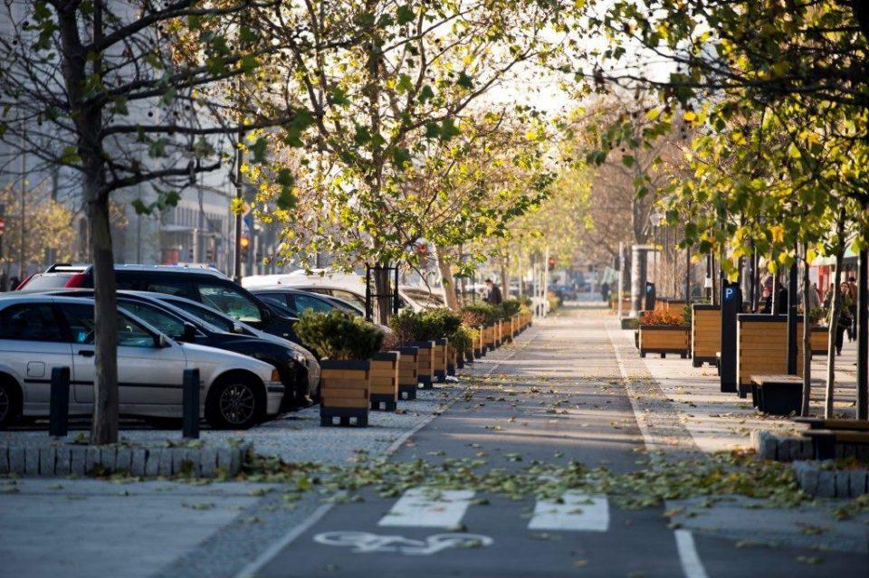urbanistyka drzewa